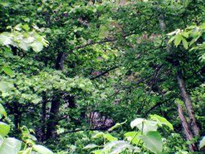 木の葉の間から土の斜面?が見えた