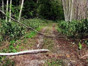 林道上に倒木ありの図1