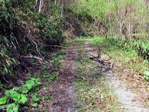 林道上に倒木ありの図2