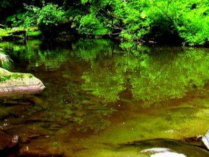 落口付近の澄んだ水
