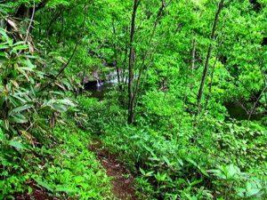 遊歩道から見る二の滝
