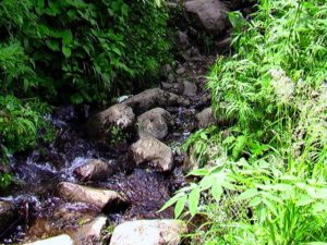 沢の水が登山道を横切る