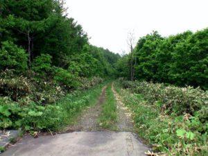 林道を下っていく