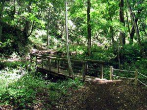 丸太橋その2