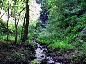 遠くに見える不老の滝