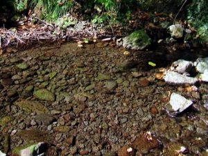 透明な川の水