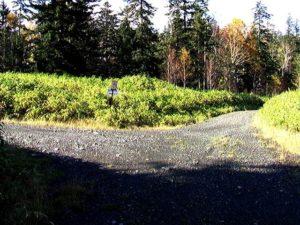 最後の林道分岐を左折
