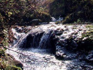 写真5上流の流れ