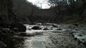 入渓場所から見た古平川上流