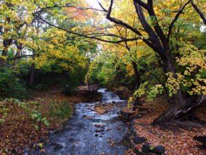 紅葉と精進川の滝