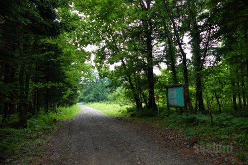 林道右手の看板