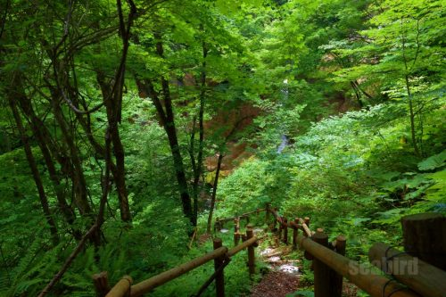 木の葉越しの七条大滝