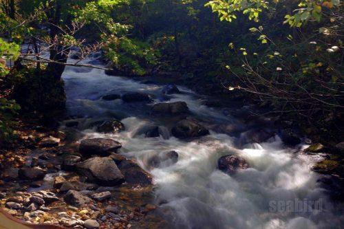 白井川の流れ
