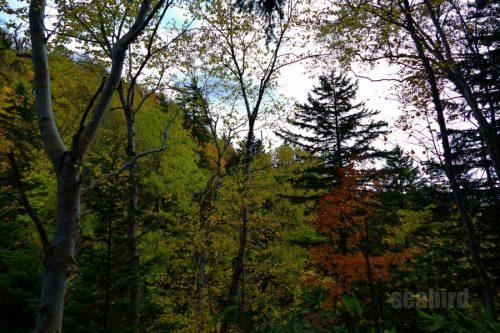 赤岩の滝付近の紅葉