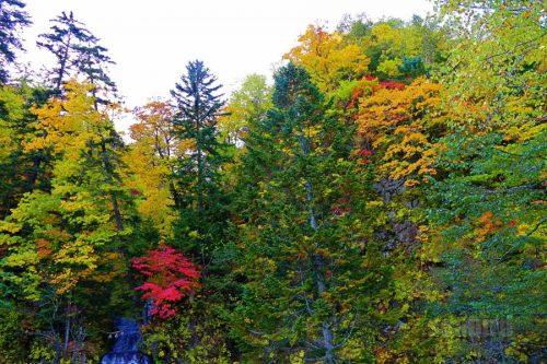 行者の滝と紅葉