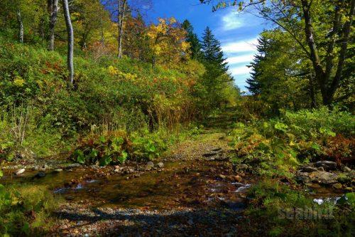 林道を横切る川