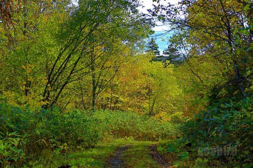 黒岩の滝の近くの黄葉