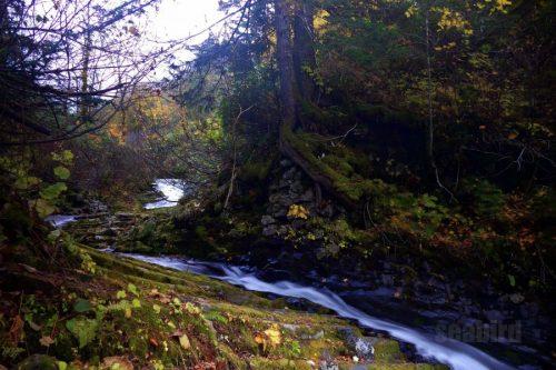 女神の滝上流の流れ
