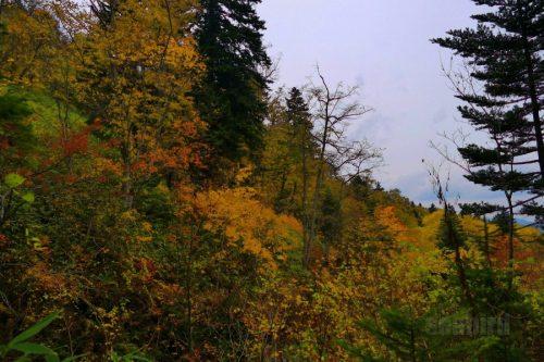女神の滝遊歩道で見た紅葉