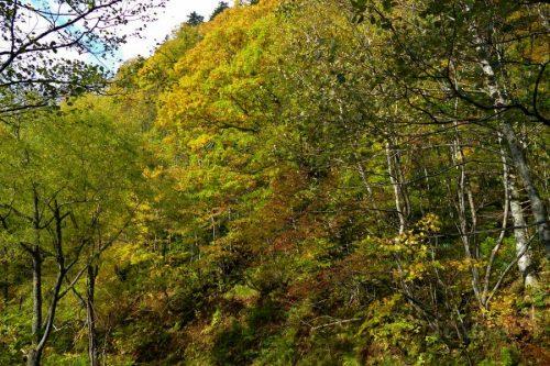 滝まで400m看板付近の紅葉