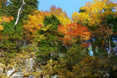 柱状節理の崖の上の紅葉