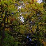 ナイオロップの川と紅葉