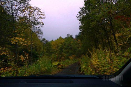 車内から十七線沢林道を撮影
