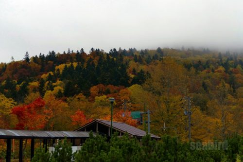 高広パーキングから見た紅葉