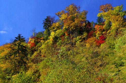 行者の滝付近の紅葉
