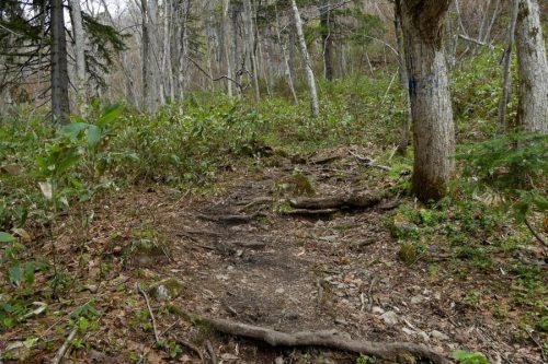 傾斜が急になってきた登山道
