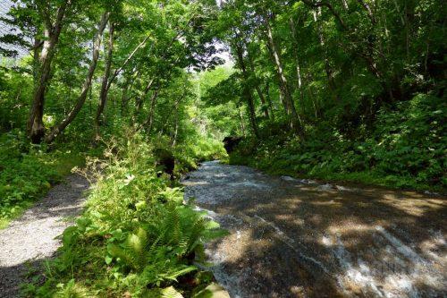 遊歩道と川の流れ