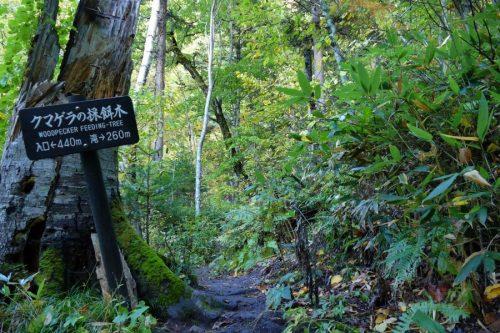 滝まで260m看板