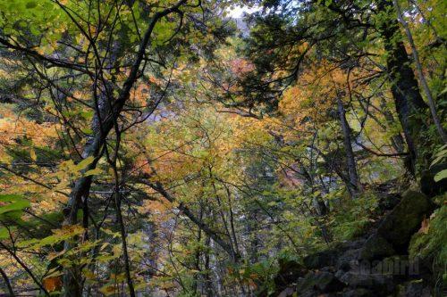 きつい傾斜と紅葉