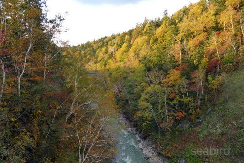 美瑛川下流と紅葉