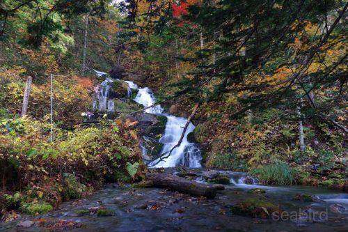 白金不動の滝と紅葉