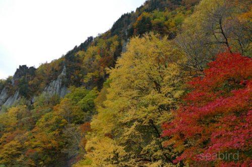 羽衣橋からの紅葉