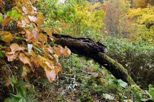 倒木が遊歩道を塞ぐ