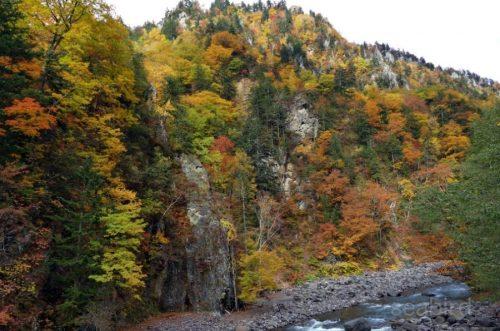 敷島橋から見る紅葉