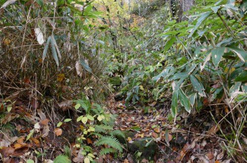 笹に隠れる遊歩道