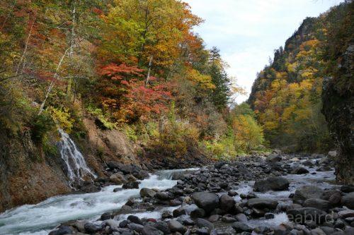 忠別川の流れ