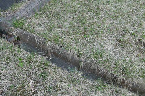 排水溝のアップ
