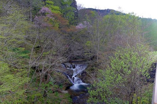 落合の滝と桜