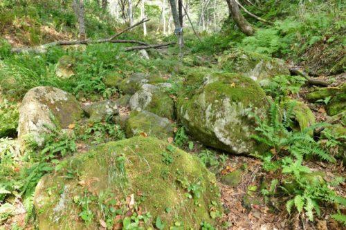 苔むした大きな岩