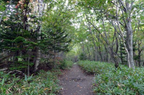 フレペの滝遊歩道前半