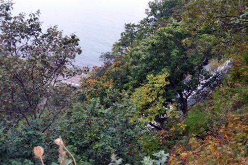 木の葉に隠れたオシンコシンの滝
